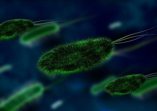 Bacteria, Virus, Organism, Pathogen, Germs, Microbes